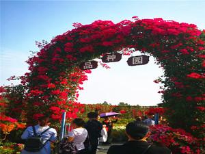 鸿瑞园林造型花卉苗木03