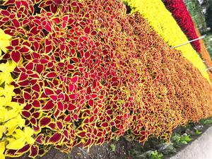 鸿瑞园林基 贵州地时令草花
